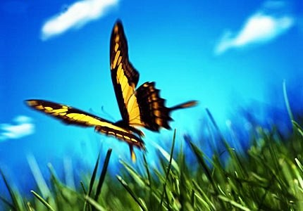 farfalla09.jpg